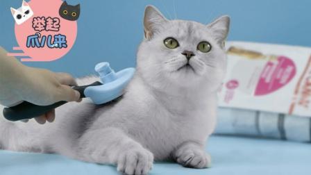 夏日猫咪护理全攻略 幸福猫生从吃开始 22