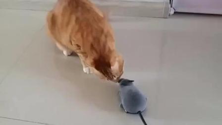 高科技老鼠现身, 猫咪这回心里也没底了