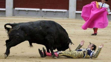 实拍西班牙斗牛现场, 斗牛士满身是这头牛留下的伤, 下一刻就等待被宰杀