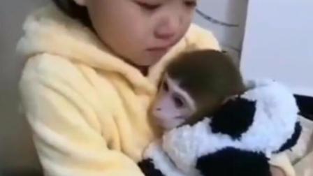 土豪给独生小姑娘买了只猴子作伴, 小姑娘哭着都不想上学了
