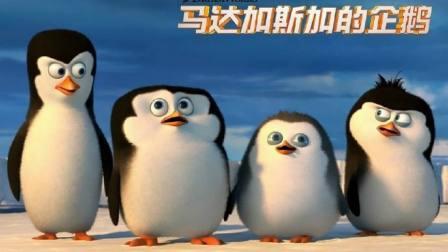 马达加斯加的企鹅  会飞的企鹅