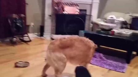 搞笑动物日常: 别亲我! 我可不是随便就能亲的