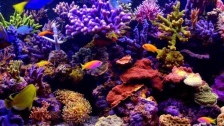 足迹·梦幻海底世界大堡礁
