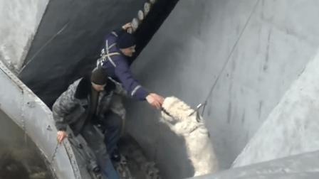 06-6期每日一狗之流浪狗救助: 爱心人士救助狗狗大合集, 超感人动物救助传播正能量
