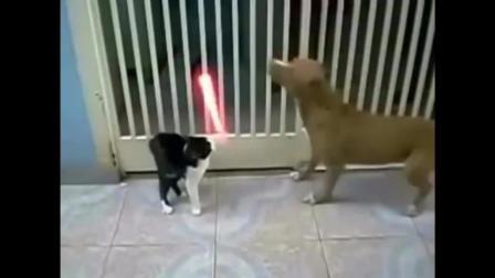 星球大战猫狗版! 喵星人遭汪星人围攻, 使出光剑杀出重围