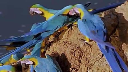 生活所迫 鹦鹉也开始吃土了