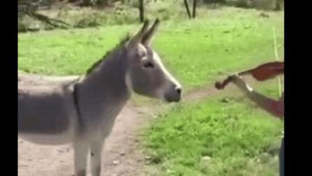美女你太有才了: 对驴弹琴