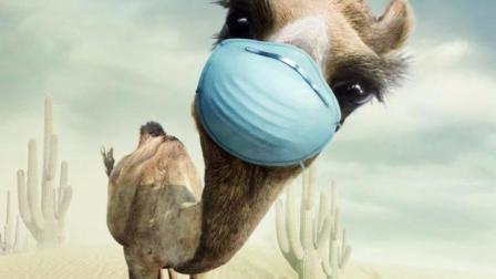 公路上的骆驼突然飙车, 吓到老司机宝宝了