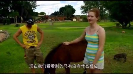 老外竟让母马和驴擦出爱情火花, 生出的是骡子吗?