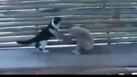 搞笑动物合集 讲真你们比城里人更会玩呀!