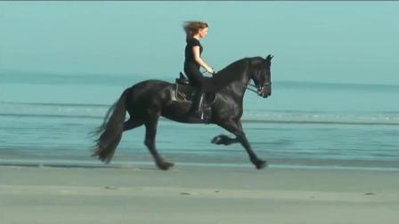 女主人与自己的乌骓马在海边慢骑, 温馨的画面, 乌骓马长发及腰