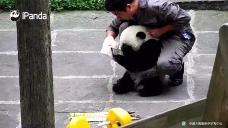 熊猫宝宝要和牛奶