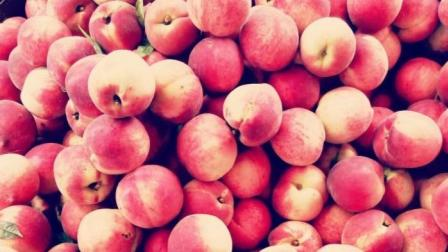 济南南部山区的桃子没有地方销售了, 请为创城尽份力