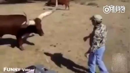 给牛神配音, 这下动物和人交流变得有趣多了