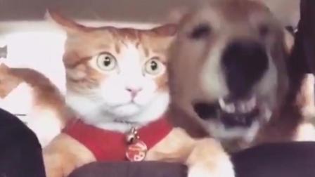 旅行中的宠物们, 动物卖萌搞笑视频集锦
