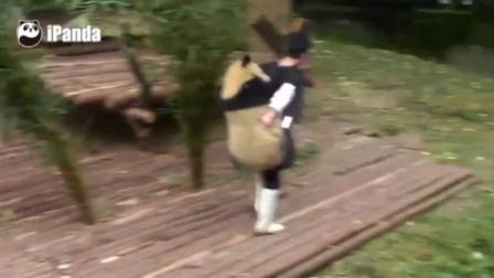 饲养员背着一个胖熊猫 好重的!