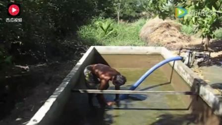 农村大叔发现自己家的水池有动静, 把水抽干之后全是密密麻麻的