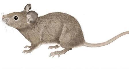 生活小窍门: 日常比较实用的抓鼠技巧, 很值得看!