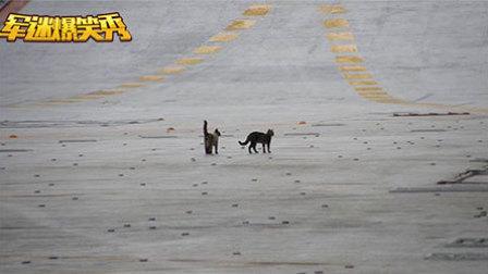 中国海军也曾养过宠物 三哥航母战斗鸡最奇葩