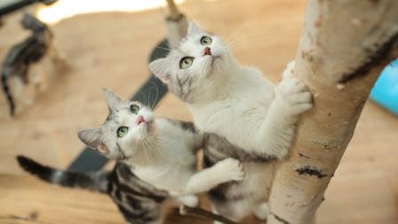 猫住得比人好 北京猫奴开了家五星级猫酒店 131
