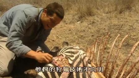 贝爷生吃秃鹫吃剩的斑马肉, 骆驼脂肪才是贝爷也吃不下的东西