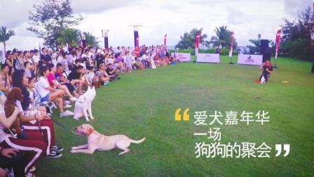 【火龙果的日常】爱犬嘉年华, 一场狗狗专属的盛会