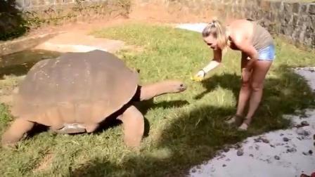 千年的王八万年的龟, 实拍俄罗斯美女探望龟爷爷