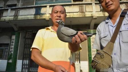 天上掉馅饼: 家中飞来一只携带重金的鸽子