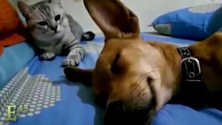 尽量不要笑-搞笑动物, 动物搞笑视频合辑 各种奇