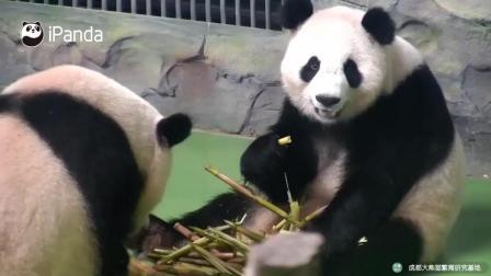 瞅啥瞅, 别的熊猫手里的笋子一定更好吃吗