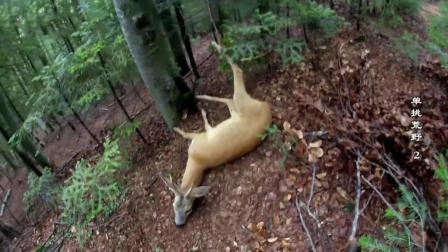 德哥这次人品爆发, 简易陷阱捉到一只大野鹿! 自己都不相信!