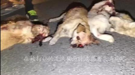 兰州榆中大批流浪狗被杀现场, 志愿者痛哭失声