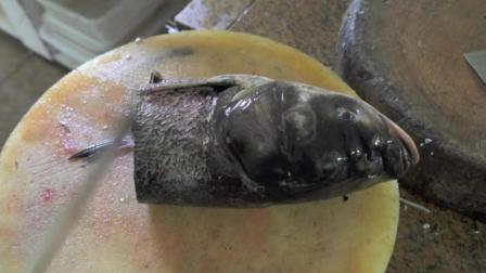 大头鱼的头可真大啊! 难道营养都被大脑袋吸收了?