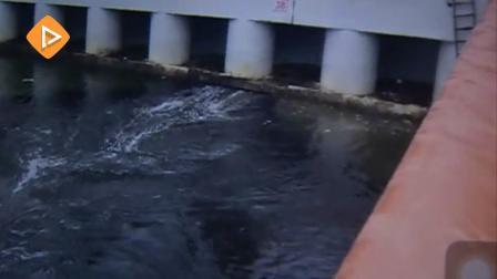 深圳湾渔人码头黑水横流还传出阵阵恶臭 究竟何因?