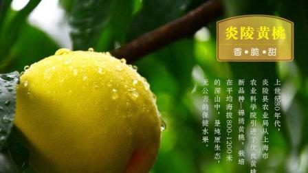 2017炎陵黄桃基地探秘, 带你去看炎陵黄桃长在什么地方