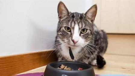 猫咪趁主人不在到柜子偷零食吃, 岂不知主人就在