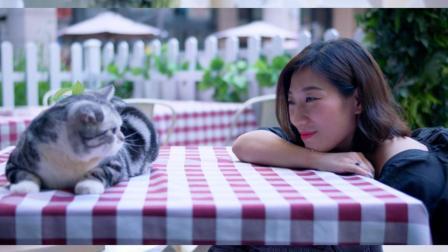 18岁老猫与美女主人的温情故事