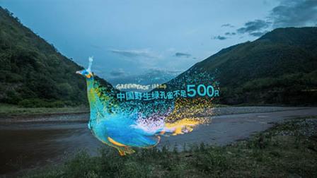 光绘——中国最后的绿孔雀
