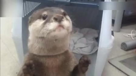 动物搞笑视频, 好萌好可爱