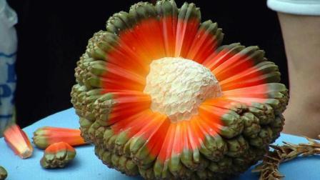 夏威夷特有的水果! 造型看了让人联想到菊花, 一吃就爽!