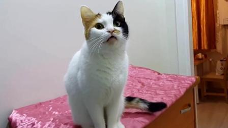 母猫发春求偶的叫声, 如果你家的猫这样叫了肯定想公猫
