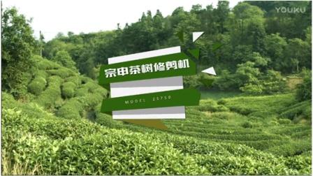 茶树修剪机视频