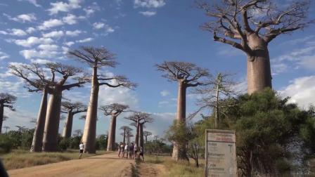 穆龙达瓦的猴面包树举世闻名 51