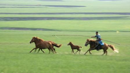 《锡林郭勒大草原》实景拍摄, 真的太美了