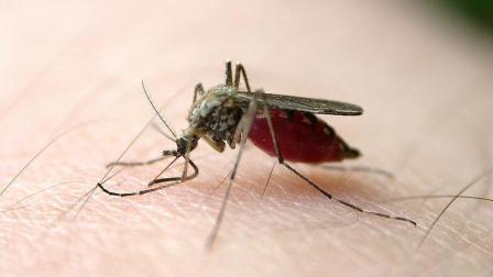 别再用蚊香驱蚊了, 试试这种方法吧, 健康无毒还管用