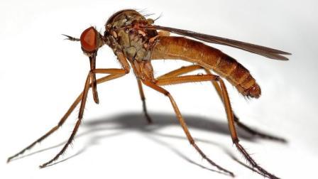 驱蚊不用点蚊香, 在窗户旁放一杯这个, 整个夏天比点蚊香还管用