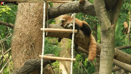 """看杭州动物园动物们如何""""花式避暑"""""""