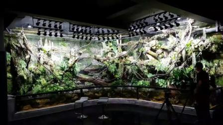 07day造景 雨林缸 大型拐角雨林墙