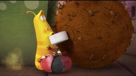 爆笑虫子: 黄虫的臭屁把屎壳郎迷得神魂颠倒, 简直是黄虫的小迷妹