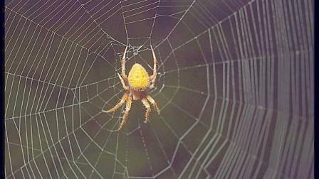 会上网的蜘蛛